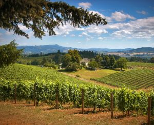 nr_winecountry_northwillamettevintners_6002994381_courtesy_visitwashingtoncounty