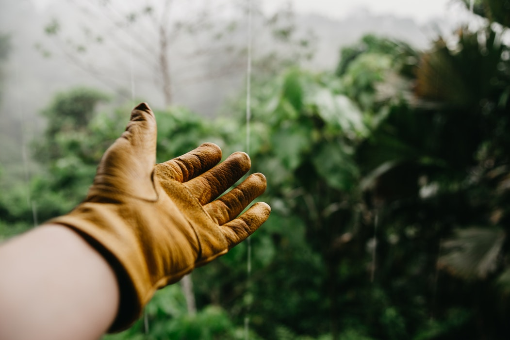 Photo of hand with garden glove in front of tree