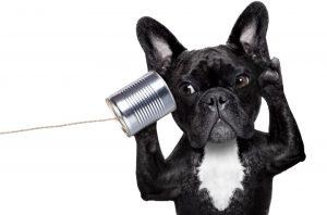 The Secret Language of Dogs @ Sniffany's Pet Boutique | Albany | Oregon | United States