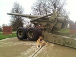 Photo of German Shepherd police dog lying in front of a large howitzer cannon on wheels at the Linn County Veterans Memorial in Albany, Oregon