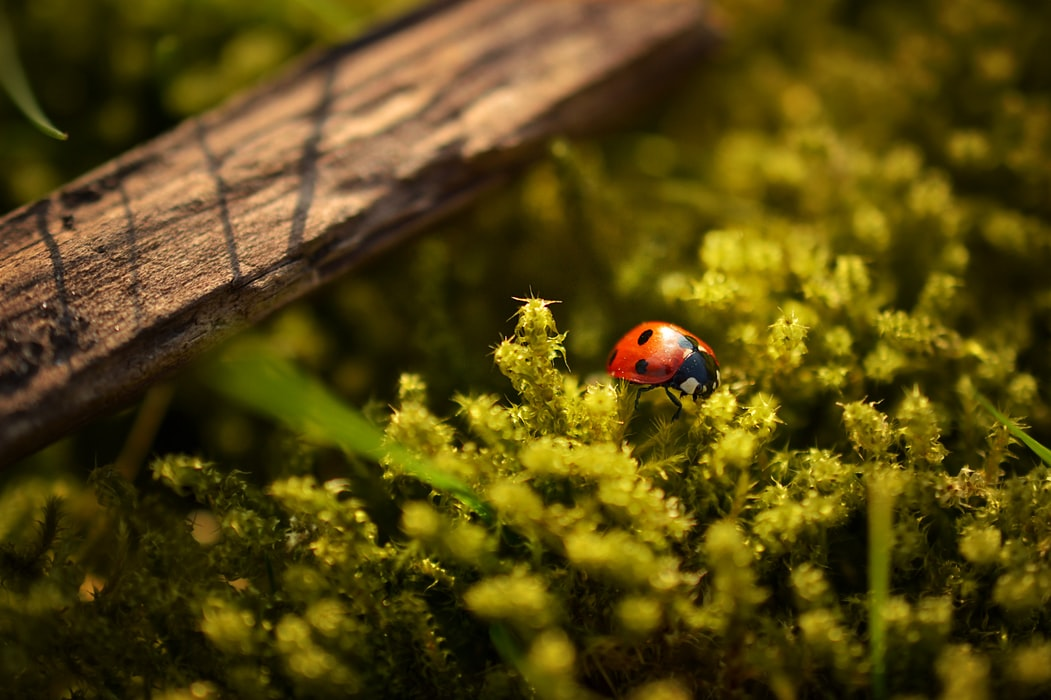 photo of lady bug