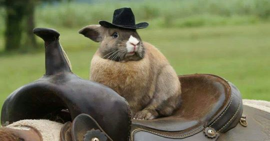 Photo of bunny on horse saddle.
