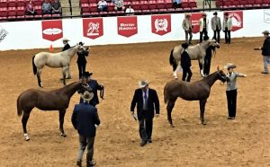 NW Buckskin Club Horse Show @ Linn County Expo Center | Albany | Oregon | United States