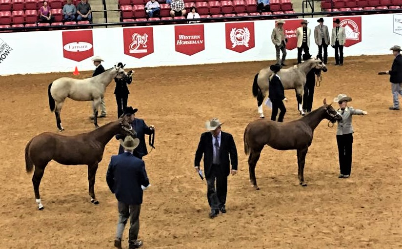 Photo of horses in show.