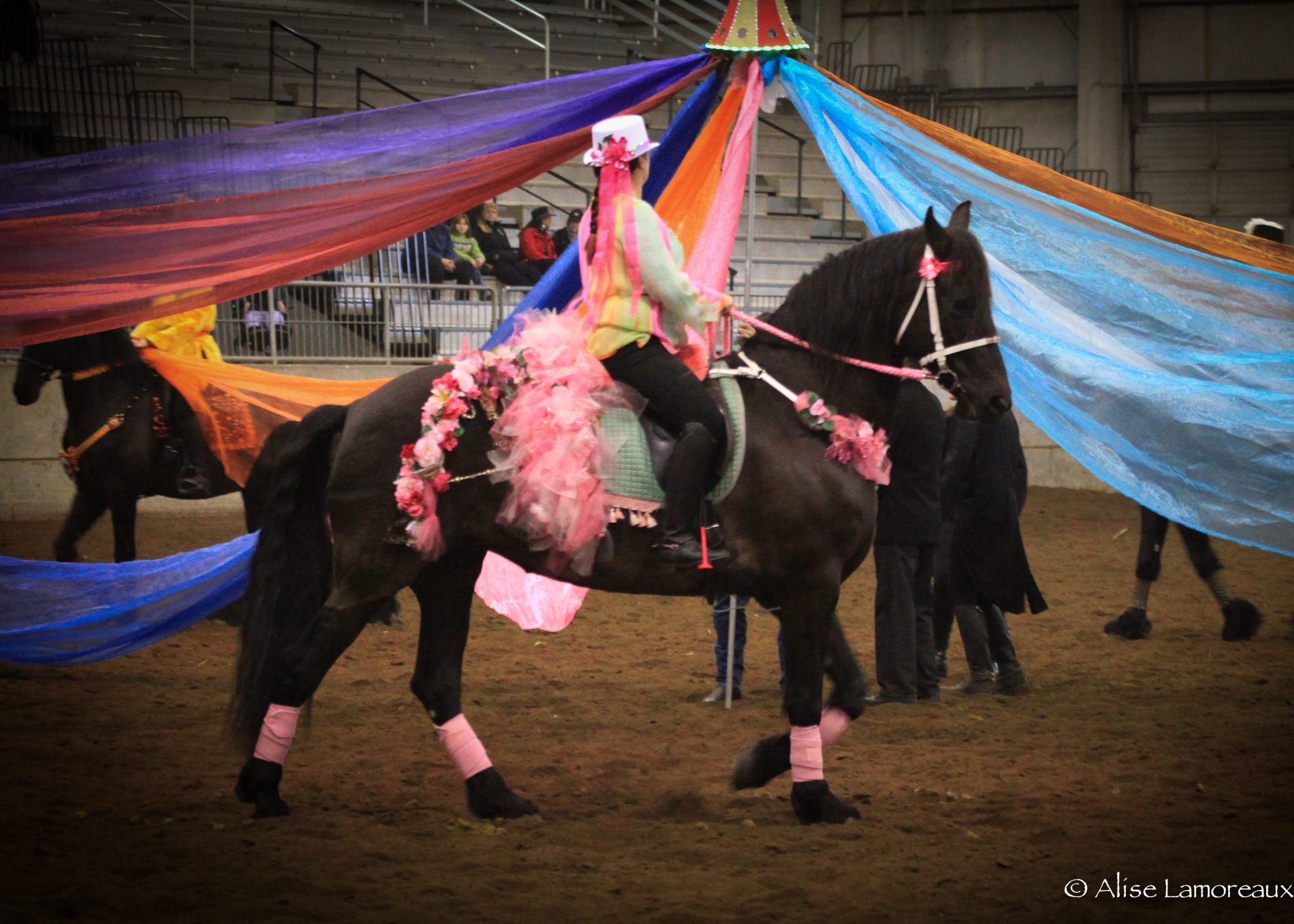 Photo of a woman in a brightly colored riding outfit riding a purebred horse at the NW Horse Show & Expo in Albany Oregon