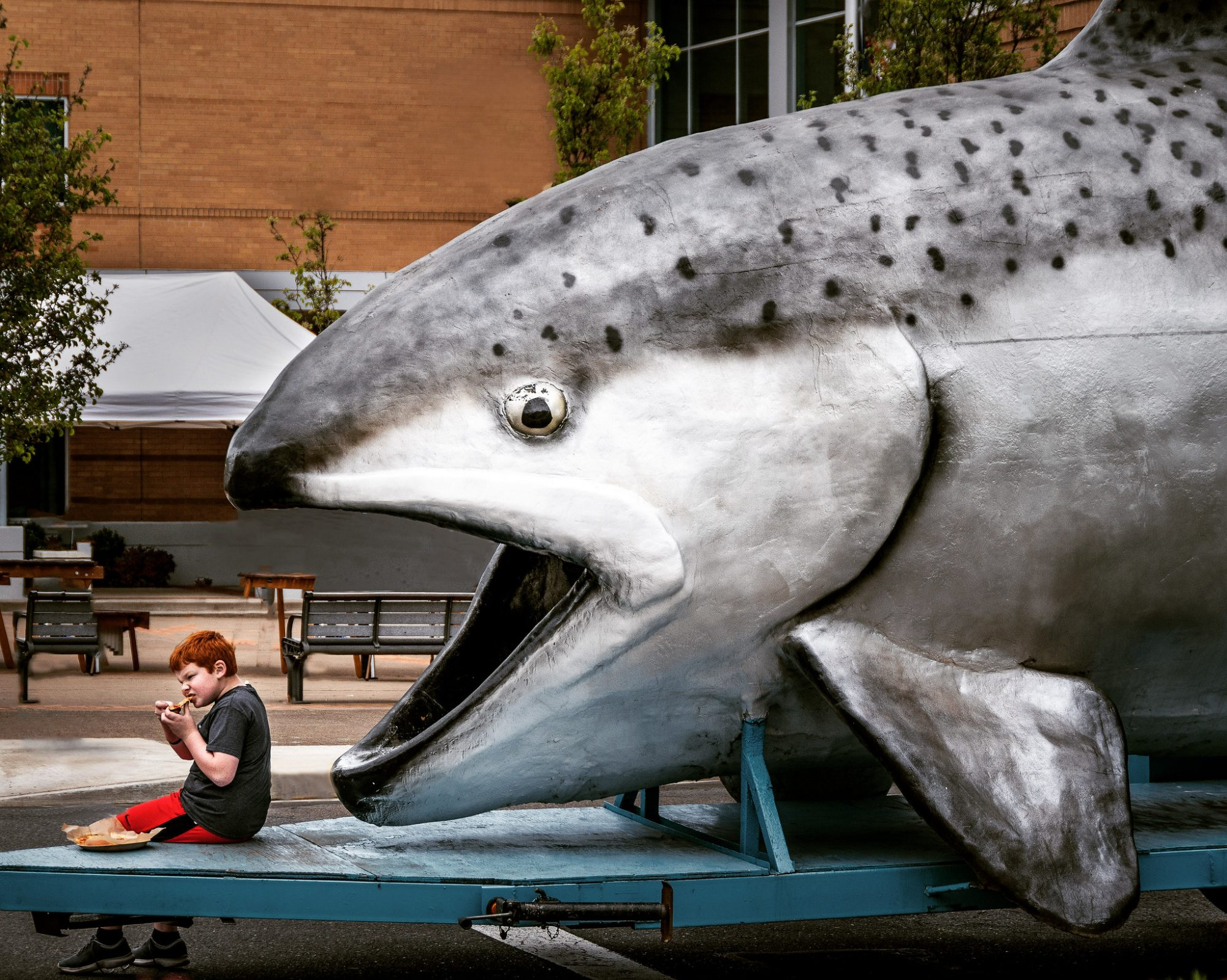 "photo of a giant parade salmon about to ""eat"" a kid all in fun at the Albany Parade of the Species"