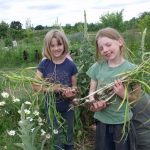 Two female children holding garlic picked at Mid-way Farms in Albany, Oregon