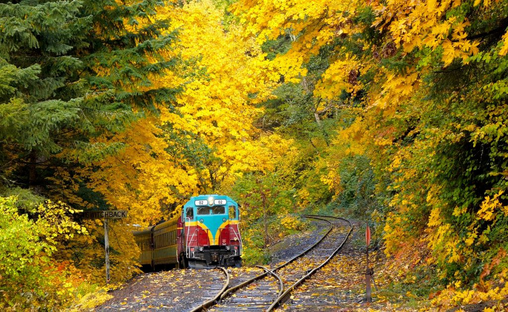 Photo of train surrounded by Fall color trees