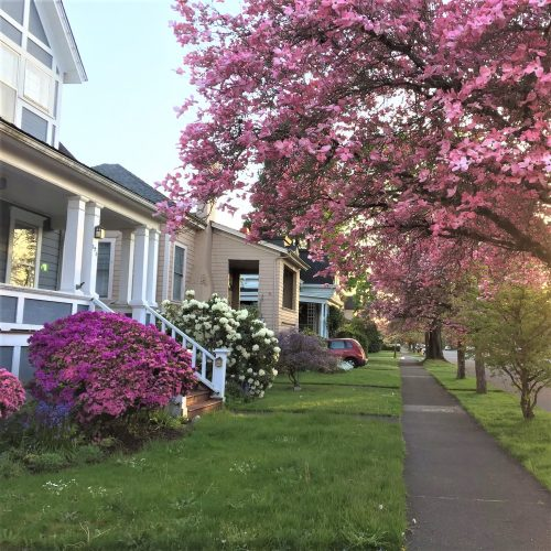 Photo houses, street and flowering trees in Albany,