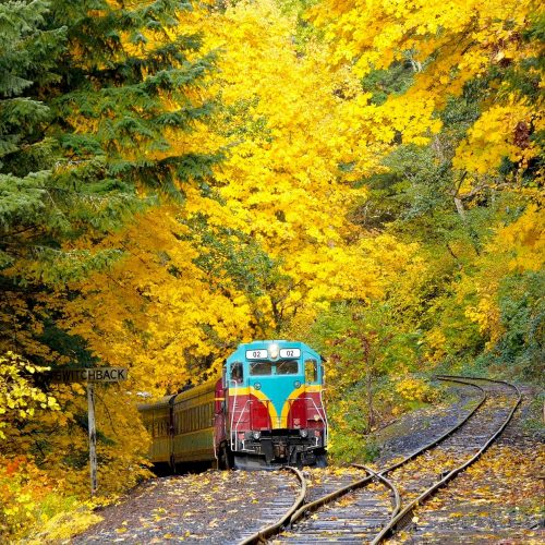 Photo of train surrounded by Fall color trees.