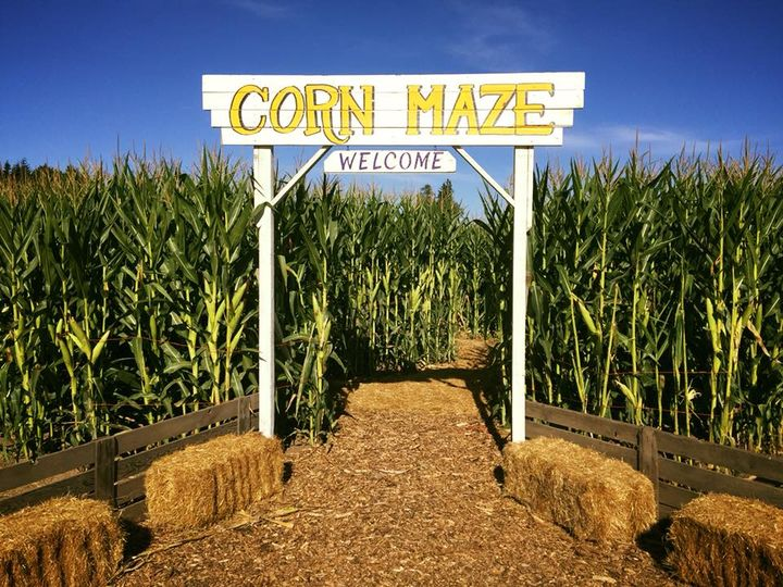 Photo of entrance to corn maze.
