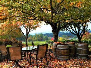 Photo of Springhill Cellars Winery, Albany, Oregon