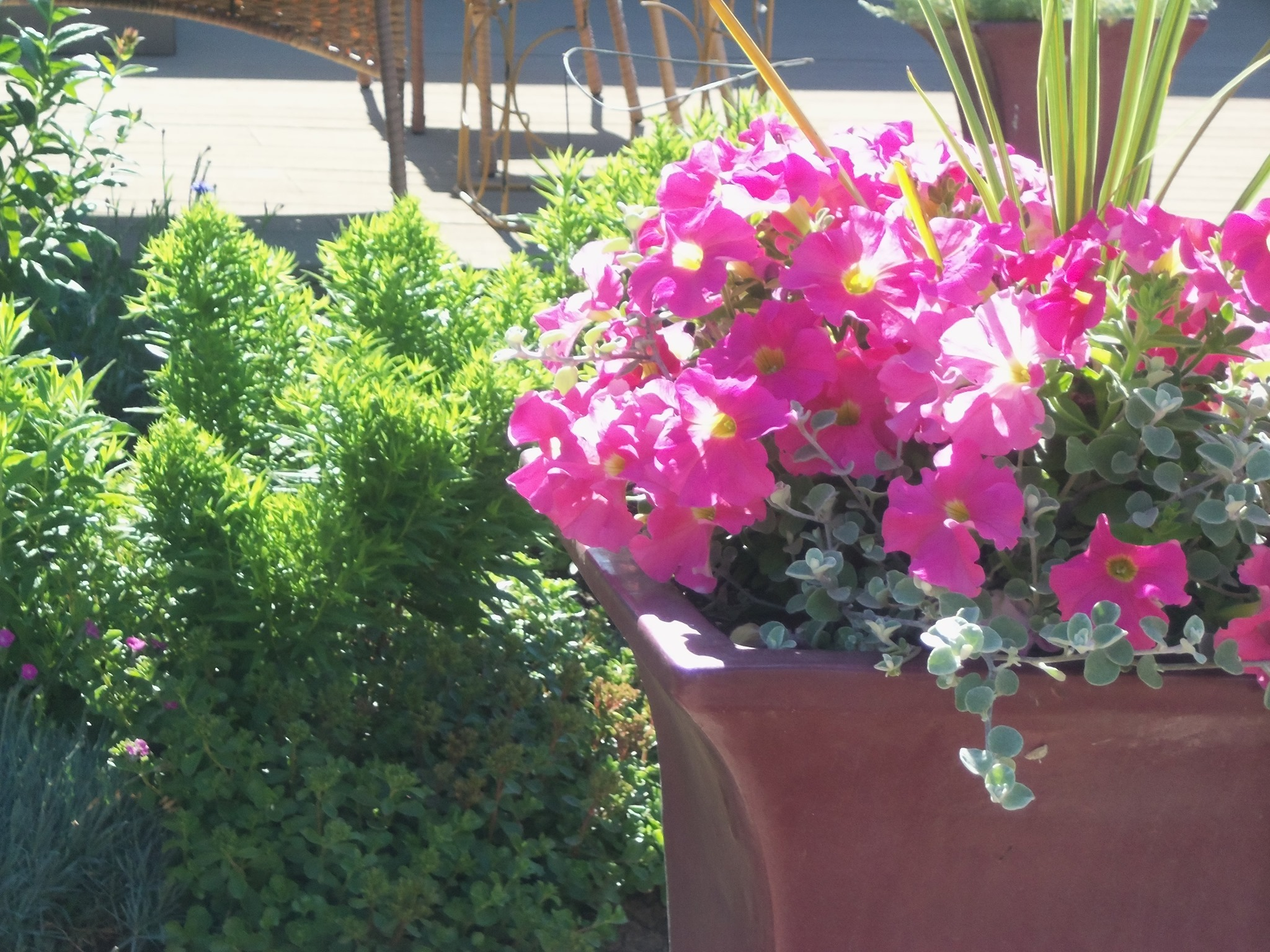 photo of pink summer flowers