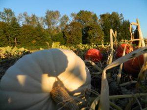Kenagy Family Farm Pumpkin Patch @ Kenagay Family Farm | Albany | Oregon | United States